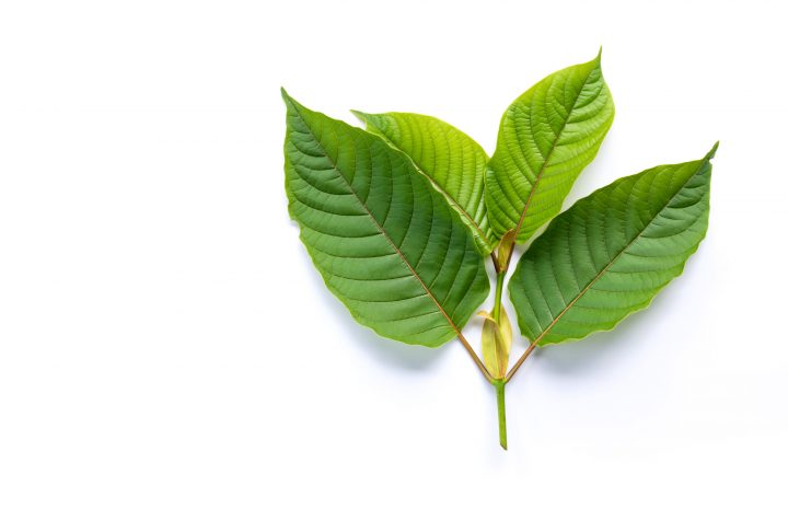 Open The Gates For Purchase Kratom With These Simple Tips